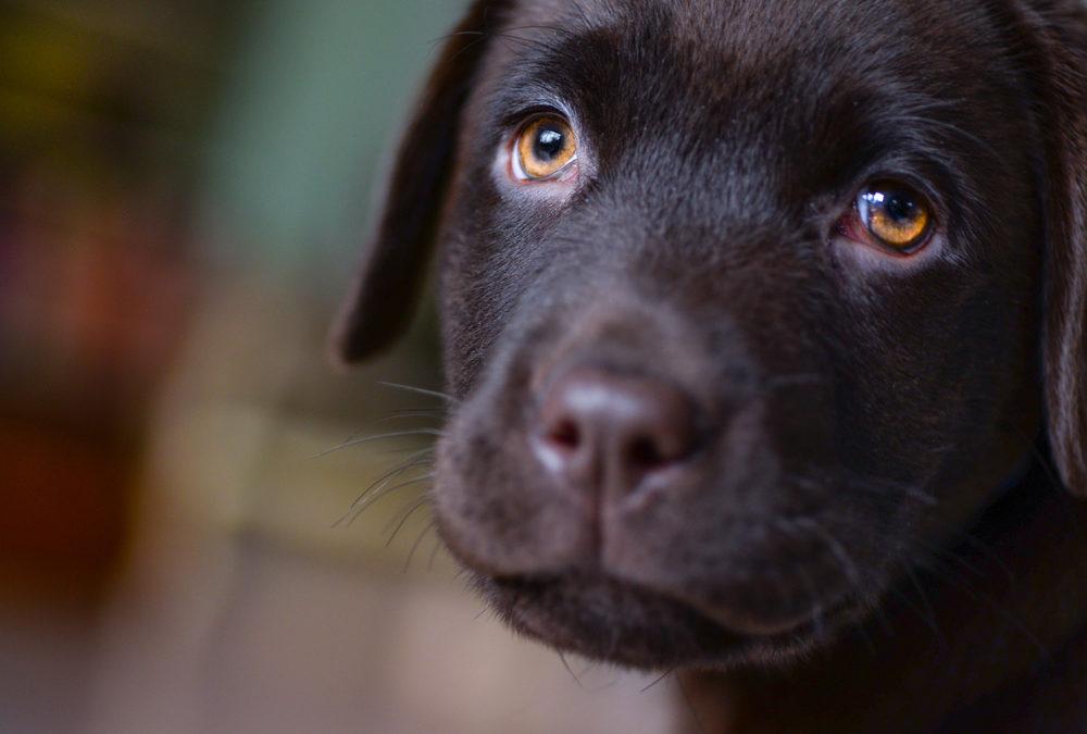 Compulsive Behaviour In Dogs