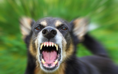 Different Types Of Aggressive Behaviour in Dogs